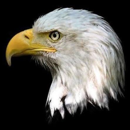 Eagle Drones Logo